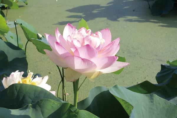 花はす公園